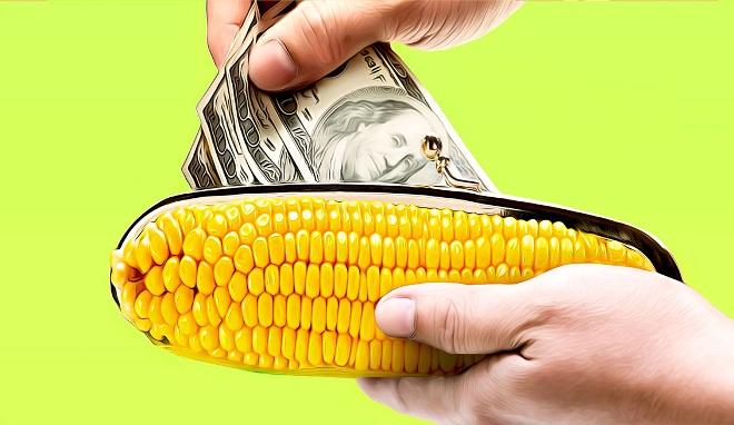 условия получения займа кукуруза